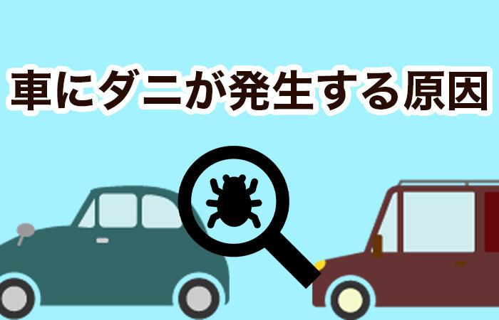 車のダニ対策